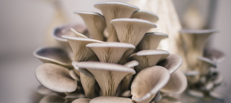 how to grow mushrooms at home