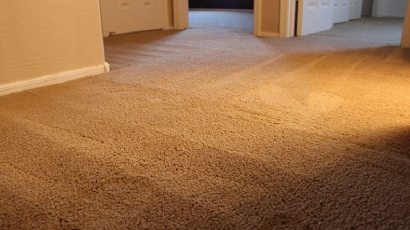 What To Do When Your Carpet Buckles After Cleaning