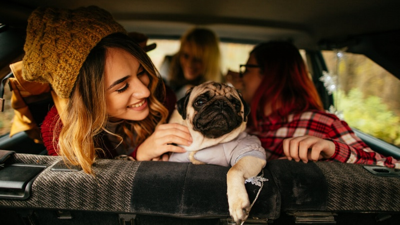 best tips for traveling with pets