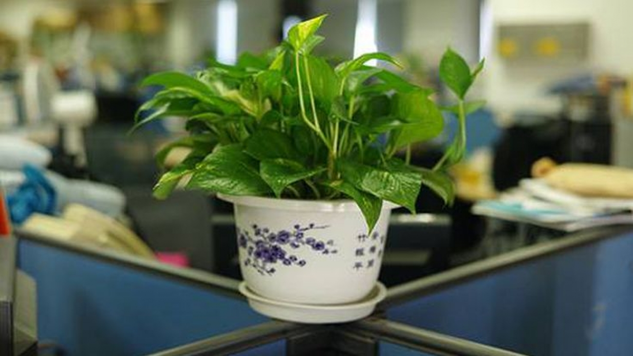 Ways to be Greener in Your Office